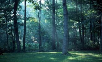 Grove on Goat Island near           Niagara Falls, early morning, ~1965.